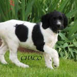 Chaco (2)