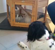 Bellona beim Tierarzt